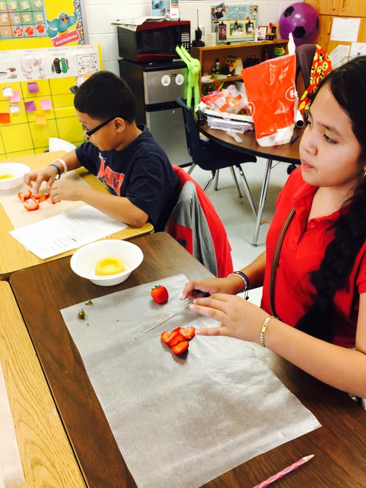 Scholars creating strawberry shortcakes through procedural texts -3